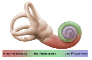 Cochlea Sound Processing
